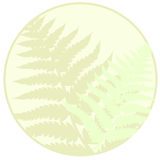 Fern leaves background Royalty Free Stock Photo