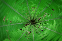 Fern leaves background stock image