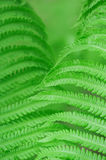 Fern leaves background Stock Image
