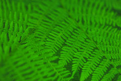 Fern leaves background royalty free stock photography