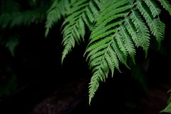 Fern leaves background. A fern in rain forest. Natural green fer Stock Photos