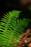 Fern leaves with beautiful pattern under bright light in spring Stock Photos