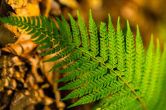 Fern leaves with beautiful pattern under bright light in spring Stock Photo