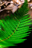 Fern leaves with beautiful pattern under bright light in spring Royalty Free Stock Image