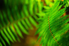 Fern leaves with beautiful pattern under bright light in spring Stock Images