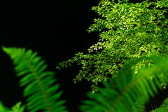 Fern leaves with beautiful pattern under bright light in spring Stock Image