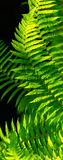 Fern leaves with beautiful pattern under bright light in spring Royalty Free Stock Photos