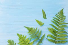 Fern leaves on wooden background royalty free stock photography