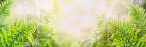 Fern leaves on blurred nature background, banner