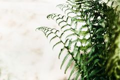 Fern leaves at blurred nature background stock photos