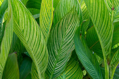 Fern leaves Stock Photography