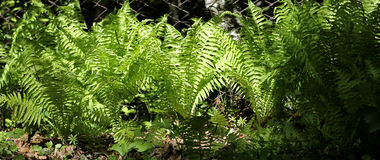 Fern leaves and bush in the summer forest Stock Photo
