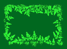 Fern leaves for card and frame in romantic green background Royalty Free Stock Photography