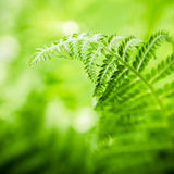 Fern leaves, the close up Stock Images