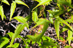 Fern leaves close up Stock Photos