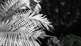 Fern leaves close up. Stock Photo