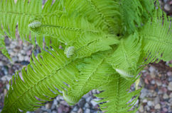 Fern leaves closeup Stock Photos