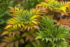 Fern leaves. Colorful  fern leaves in autumn Stock Photography
