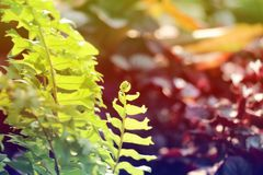 Fern leaves colorful texture background. Fern leaves colorful texture in nature  background Stock Photography