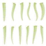 Fern Leaves conjunto Imagenes de archivo