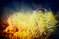 Fern leaves on dark nature background Stock Image