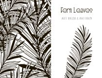 Fern Leaves Design. Art Brush and Pattern. Vector. Black Hand Drawn Fern Leaves. Floral Design Element. Object, Color and Size adjustable Flexible Art Brush and Stock Images