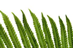 Fern leaves dry on the white Royalty Free Stock Photography