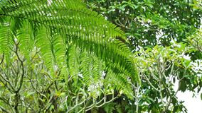 Fern leaves. stock footage