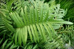 Fern leaves. In forest background Stock Photo