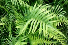 Fern leaves. In forest background Stock Photos
