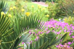 Fern leaves in foreground. With brightly coloured flowers in yellow and purple and bushes and green grass behind. tranquil park scene Stock Image