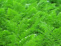 Fern leaves in the forest stock photo