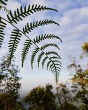 The fern leaves in the forest. Tree plants travel green sky blue close-up nature jungle outdoor Royalty Free Stock Photo