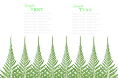 Fern leaves frame Royalty Free Stock Photography