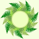 Fern Leaves Frame Royalty Free Stock Images