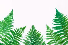 Fern leaves isolated on white background. Flat lay, top view. Fern leaves frame, isolated on white background. Bright floral border with space for text. Natural Royalty Free Stock Photos