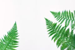 Fern leaves isolated on white background. Flat lay, top view. Fern leaves frame, isolated on white background. Bright floral border with space for text. Natural Stock Photo