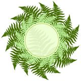Fern leaves frame. With room for your text Stock Photo