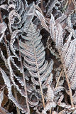 Fern Leaves in the frost Stock Photos