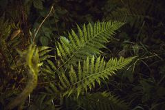 Fern leaves. Green fern leaves in the forest Royalty Free Stock Photography