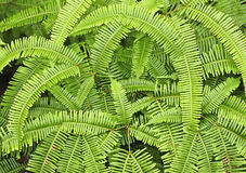 Fern leaves. In a jungle Stock Photos