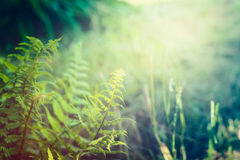 Fern leaves on jungle or rainforest nature background. Outdoor royalty free stock images