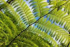 Fern Leaves Macro Blue Sky Royalty Free Stock Photo