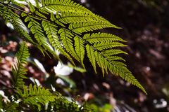 Fern leaves. Natural texture of fern leaves Stock Images