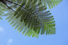 Fern leaves at the park Stock Photography