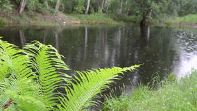 Fern leaves pond Stock Photos
