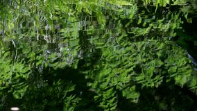 Fern leaves reflected in water. stock video footage