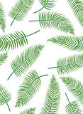 Fern leaves. Seamless background of fern leaves. Vector illustration Stock Image