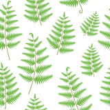 Fern leaves seamless vector pattern Royalty Free Stock Images