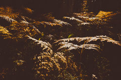 Fern Leaves secado Fotografía de archivo